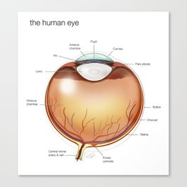 Human Eye Anatomy Illustration Canvas Print