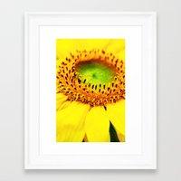 sunflower Framed Art Prints featuring Sunflower by Falko Follert Art-FF77