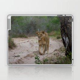 Female Lion at Tembe Elephant Park Laptop & iPad Skin