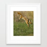 coyote Framed Art Prints featuring Coyote by Debbie Maike Photography