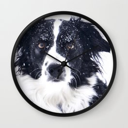 border collie in winter Wall Clock