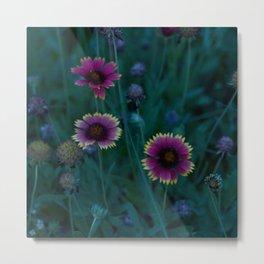 evening macro, flowers on the dunes Metal Print