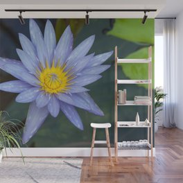 Water Lily Blue Wall Mural
