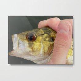 Harpo the Bonus Fish Metal Print