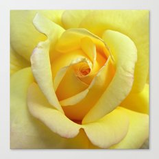 rose bloom Canvas Print