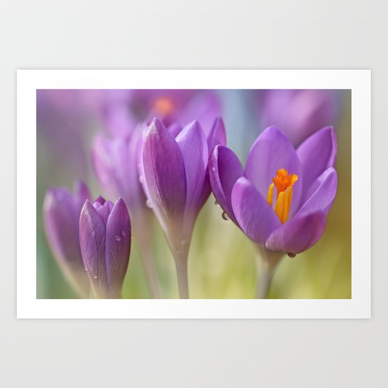 Crocuses.... waking up! (II) Art Print