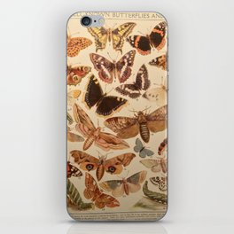 Vintage insects 1 iPhone Skin