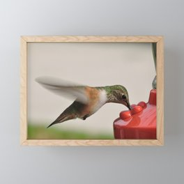 Dropping in for Lunch Framed Mini Art Print