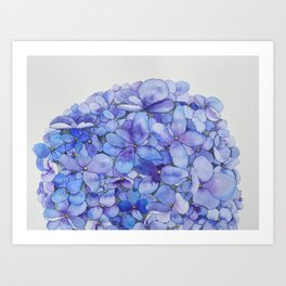 Watercolour Hydrangea Art Print