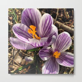 First hint of spring Metal Print