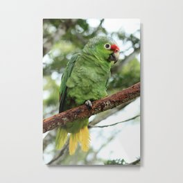 Parrot Perched on a Branch Metal Print