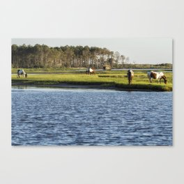 Chincoteague Ponies on Assateague Island Canvas Print
