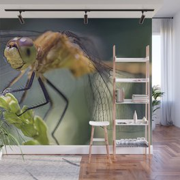 Dragonfly Closeup Wall Mural