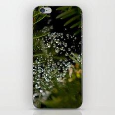 Nature's Ornaments iPhone & iPod Skin