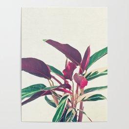 Prayer Plant II Poster