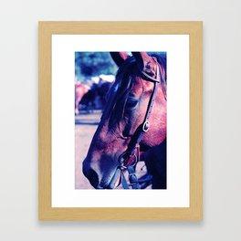 Horse-1-Blues Framed Art Print