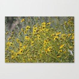 Brittle Bush 3 At Coachella Wildlife Preserve Canvas Print