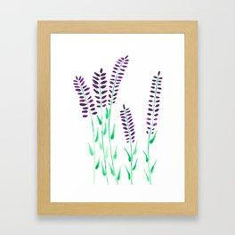 Watercolor Floral Herbs Lavendel Framed Art Print