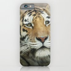 Tiger, Tiger iPhone 6 Slim Case