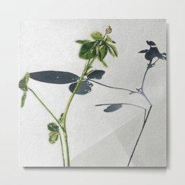 Clover. Green white gray. Shamrock. Nature. Metal Print