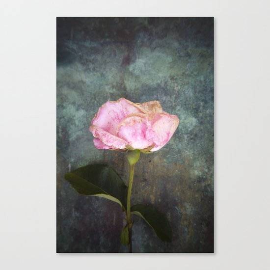 Wilted Rose III Canvas Print