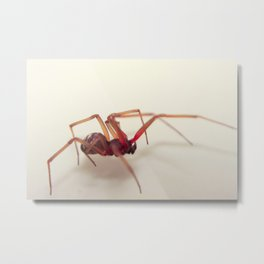 An Unwanted House Guest Metal Print