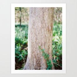 Climbing Vine on a Cypress Tree / Florida Fine Art Film Photography Art Print