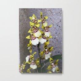Longwood Gardens Orchid Extravaganza 48 Metal Print