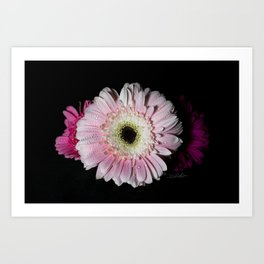 Floral Untitled .02 Art Print