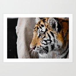 Tiger cub in profile Art Print