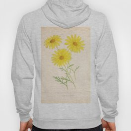 Chrysanthemum Vintage Floral Flower Hand Drawn Scientific Illustration Hoody