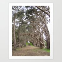 Half Moon Bay Trail by the Beach Photo Print Art Print