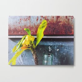 yellow euphorbia milii plant with old lusty metal background Metal Print