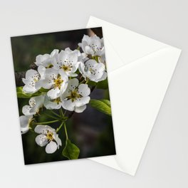 Flowering Pear Tree Stationery Cards