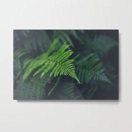 fairy fern Metal Print