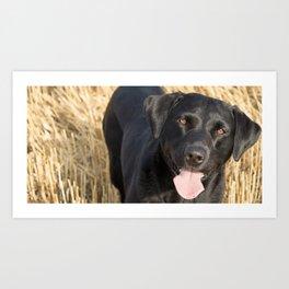 Corn Dog Art Print
