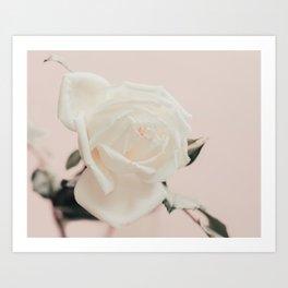 White Rose on Baby Pink Art Print