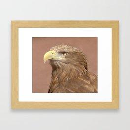 Sea Eagle Framed Art Print