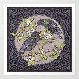 Celtic Starlings Art Print