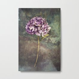 Beautiful Hydrangea Metal Print