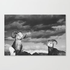 rams | fig. 01 | odd ram out Canvas Print