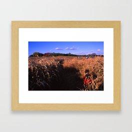Corn Maize  Framed Art Print