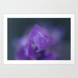 Lavender Fade Art Print