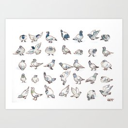 Pigeon Collection Art Print