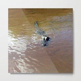 Everglade Gator Metal Print