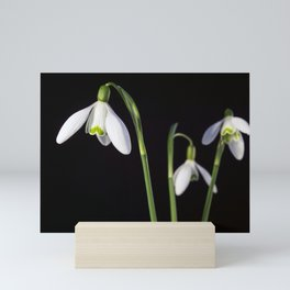 Spring Comes to a Wall Near You. Mini Art Print