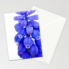 Grape Hyacinth (Muscari armeniacum) - modern minimalist flower photo Stationery Cards