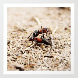 Ants 1 Art Print