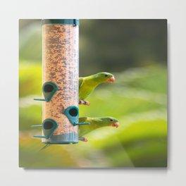 green parrots Metal Print