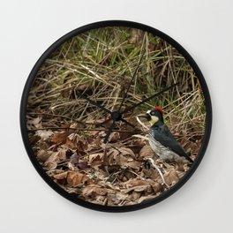 Acorn Woodpecker Wall Clock